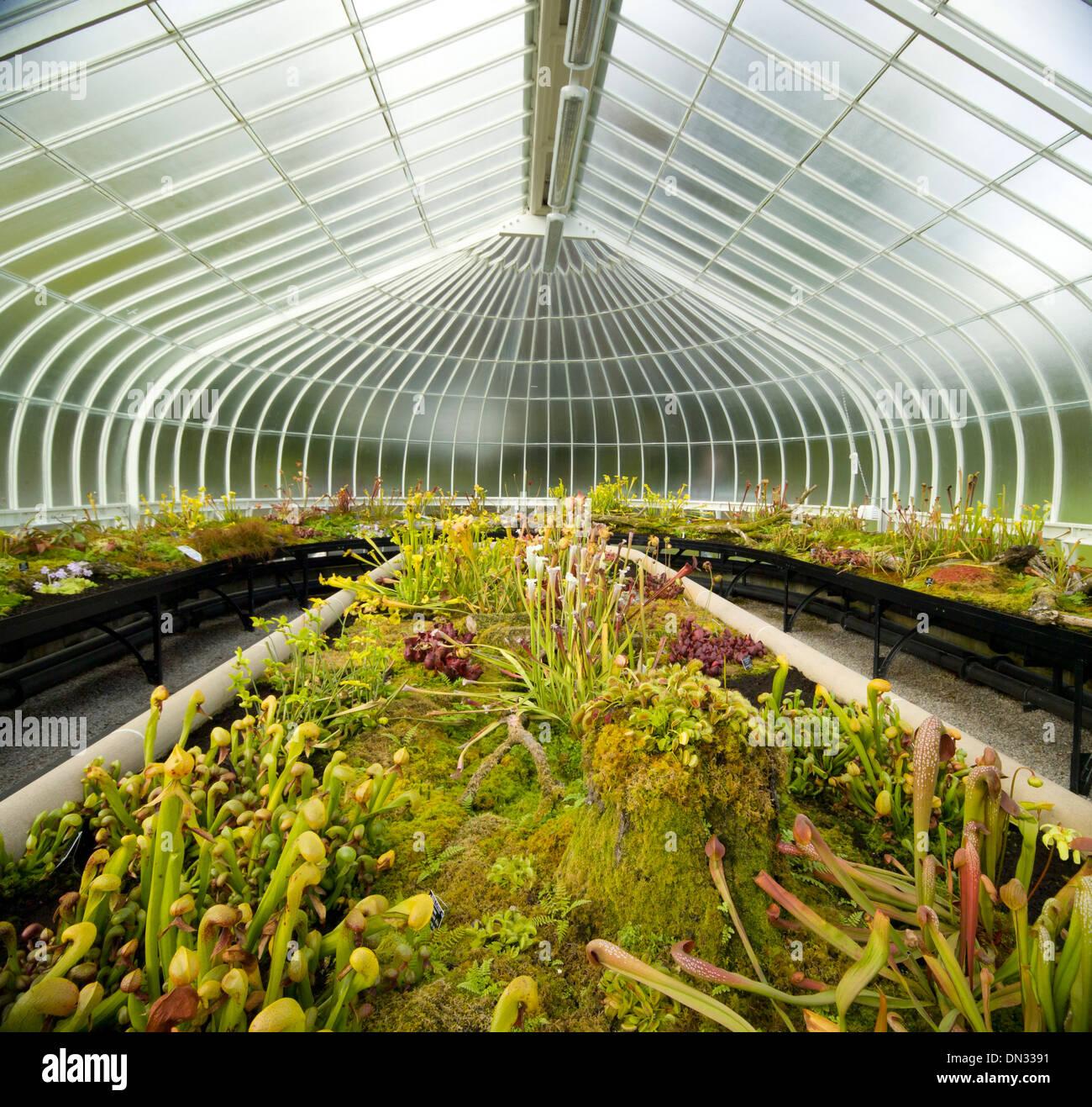 Inside The Glasshouse Kibble Palace Glasgow Botanic Garden