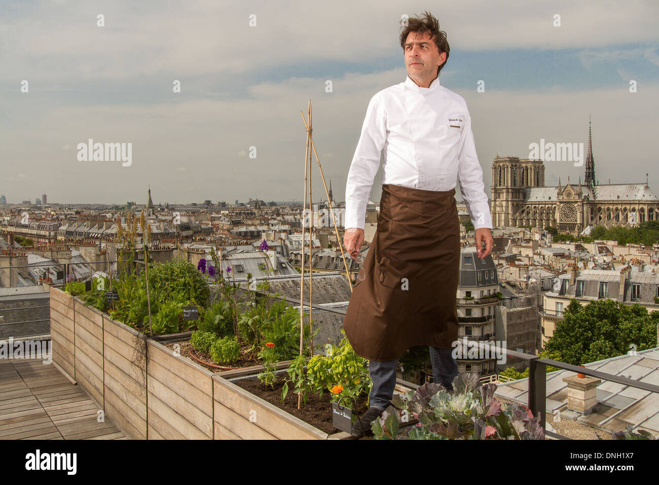 yannick alleno in the rooftop vegetable garden of the restaurant le stock photo royalty free. Black Bedroom Furniture Sets. Home Design Ideas