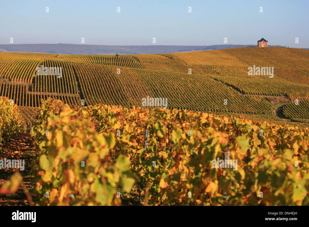 The champagne region in autumn loge de montaigu marne for Champagne marne