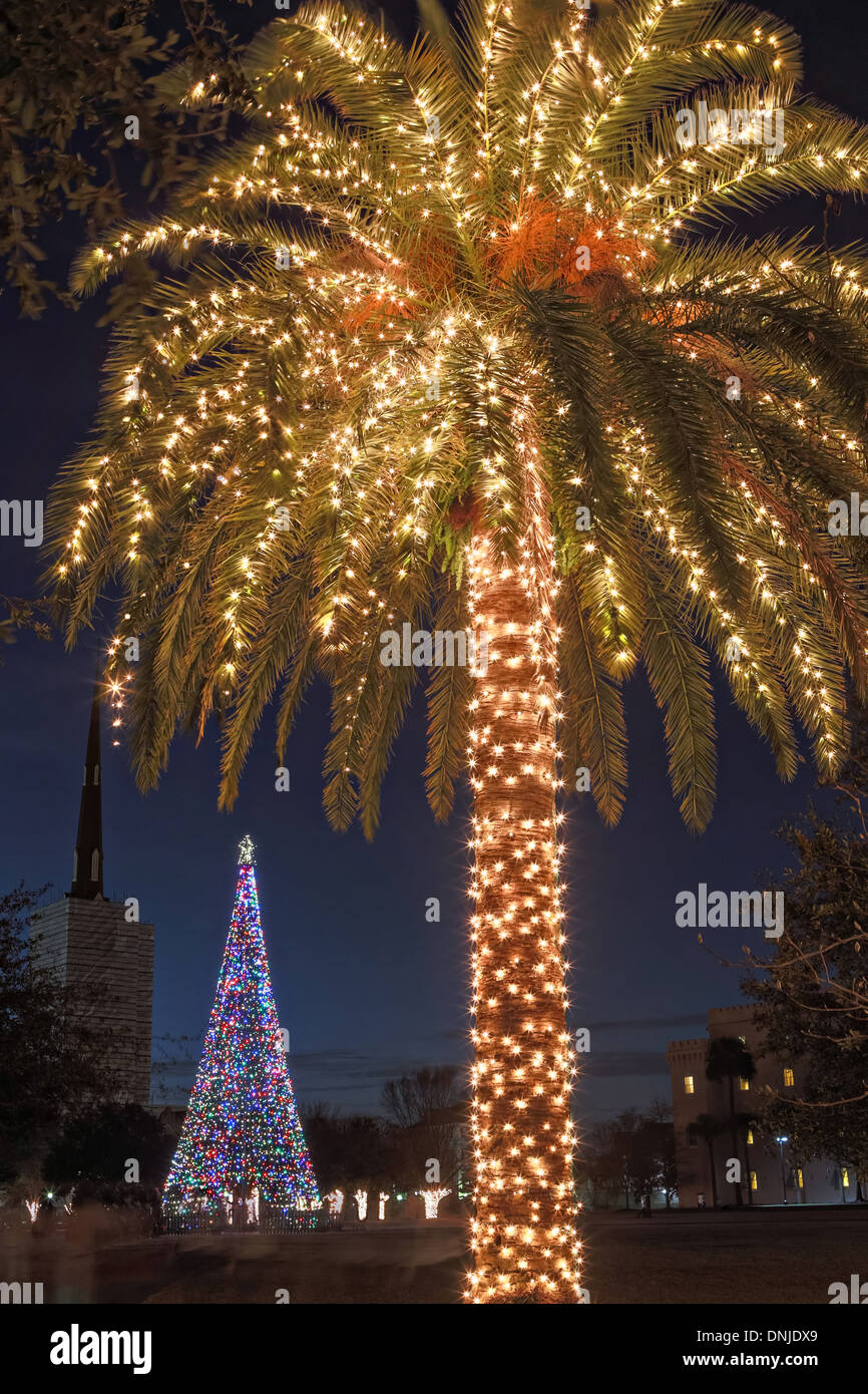 palm tree with christmas lights on marion square in historic charleston south carolina