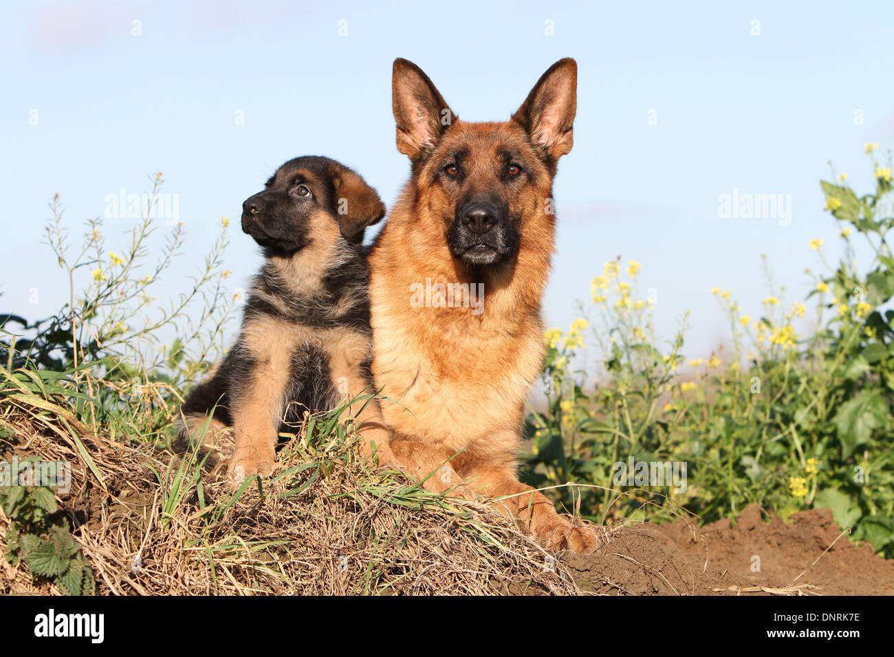 nude and german shepherd