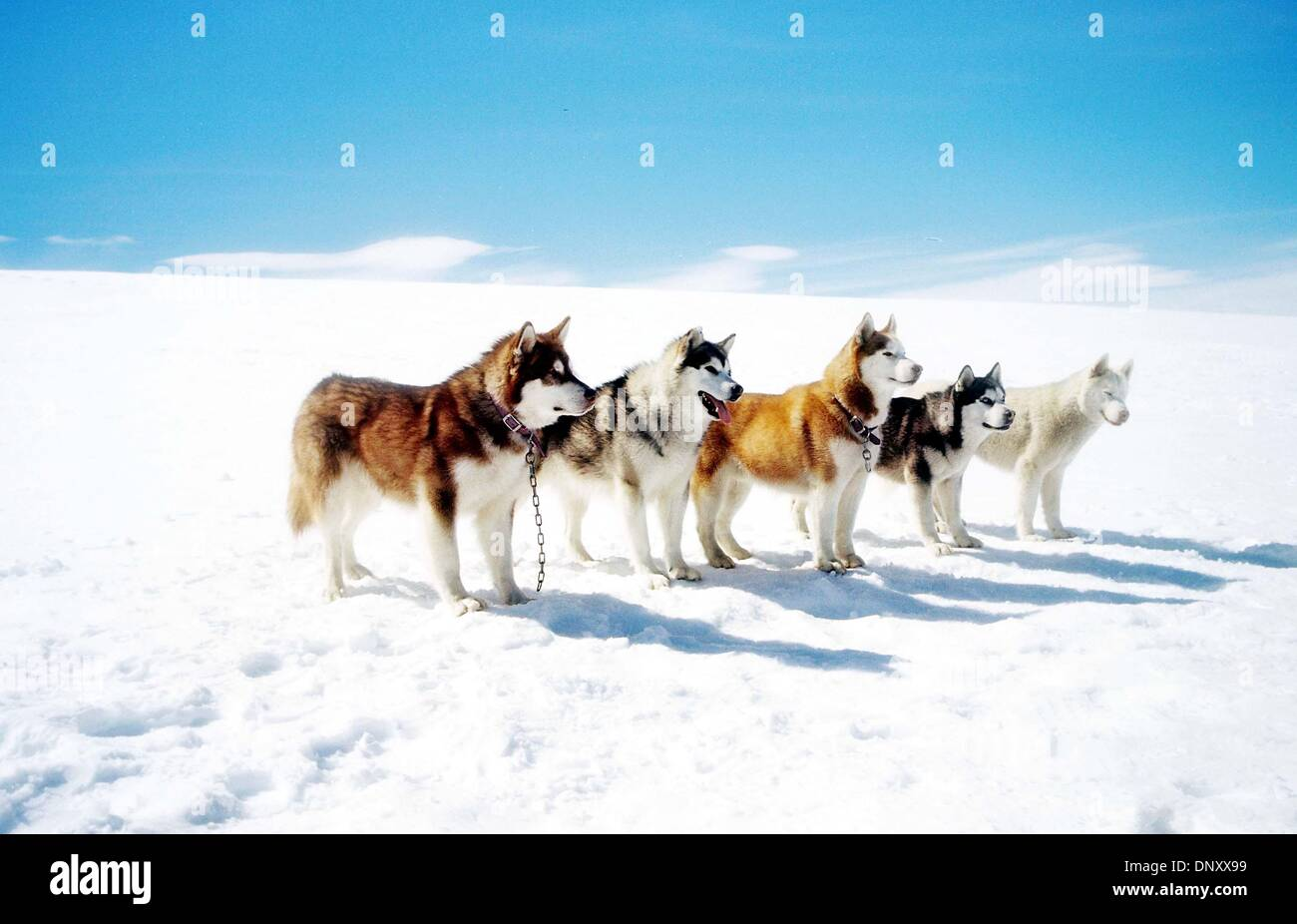 Pics For > Eight Below Buck