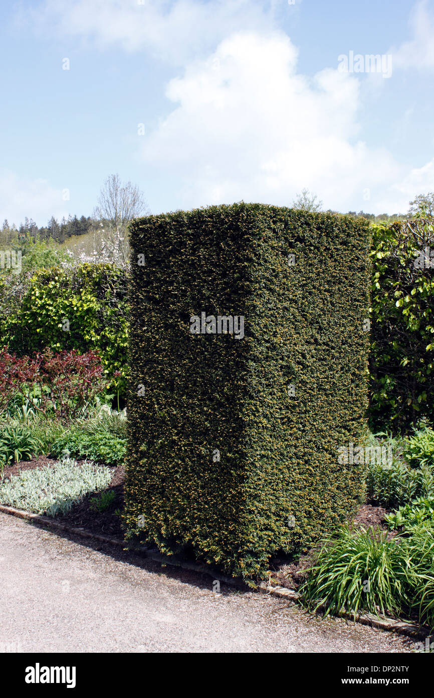 taxus baccata yew hedge columns stock photo 65214603 alamy. Black Bedroom Furniture Sets. Home Design Ideas
