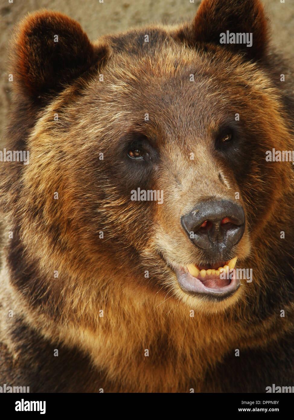 bear-cleveland-zoo-stockyards-cleveland-