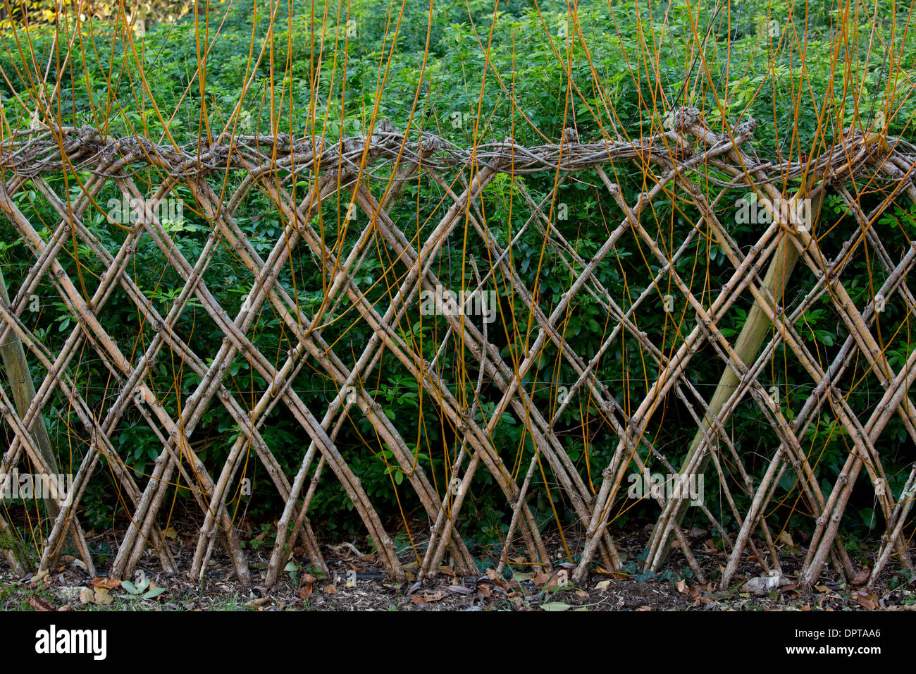 Living willow fence sprouting Dordogne France Stock ImageWillow Fence Stock  Photos Willow Fence Stock Images AlamyLiving Willow Fence Panels  living willow hedgeLiving Willow  . Living Willow Fence Panels. Home Design Ideas