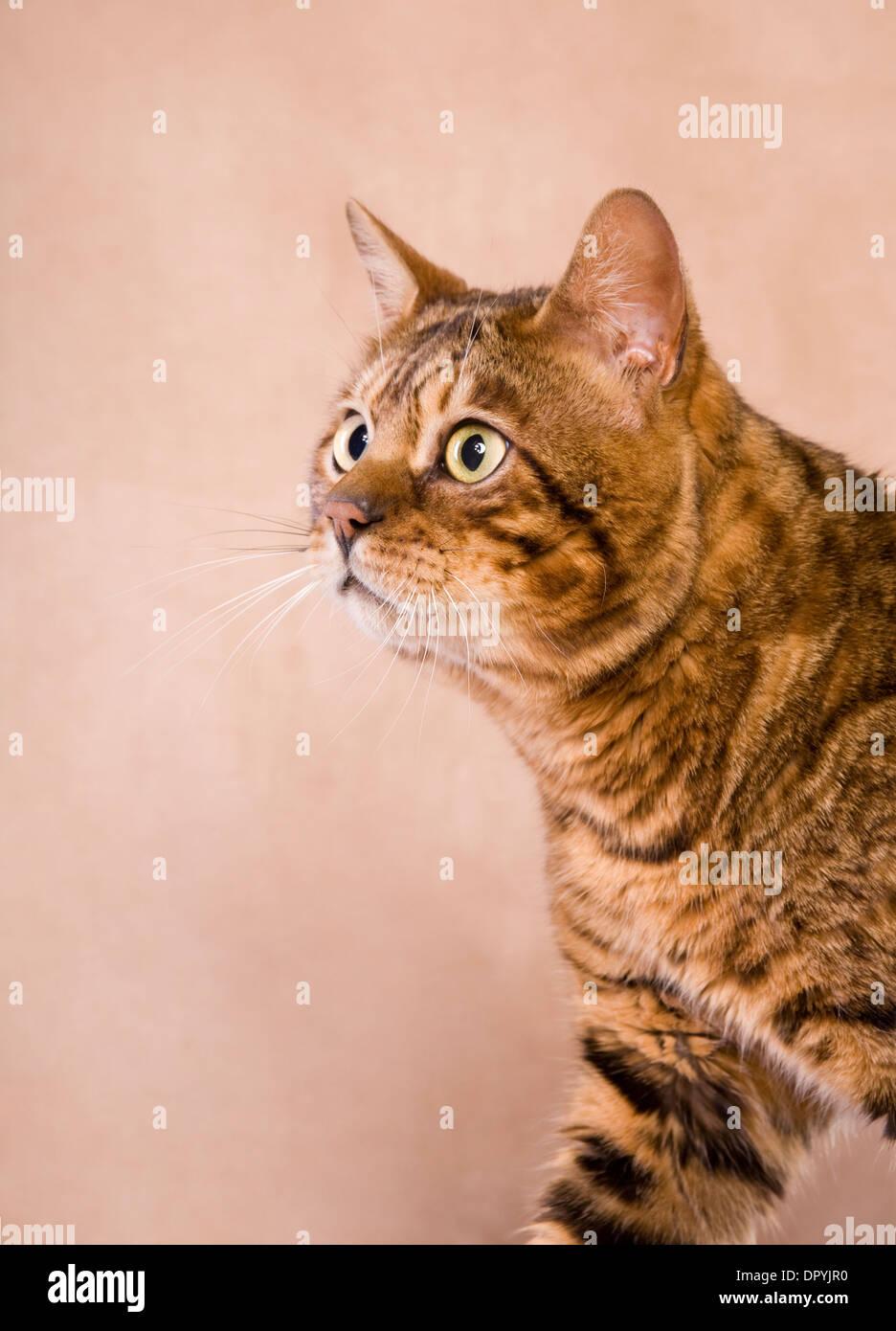 cat scratch fever song lyrics
