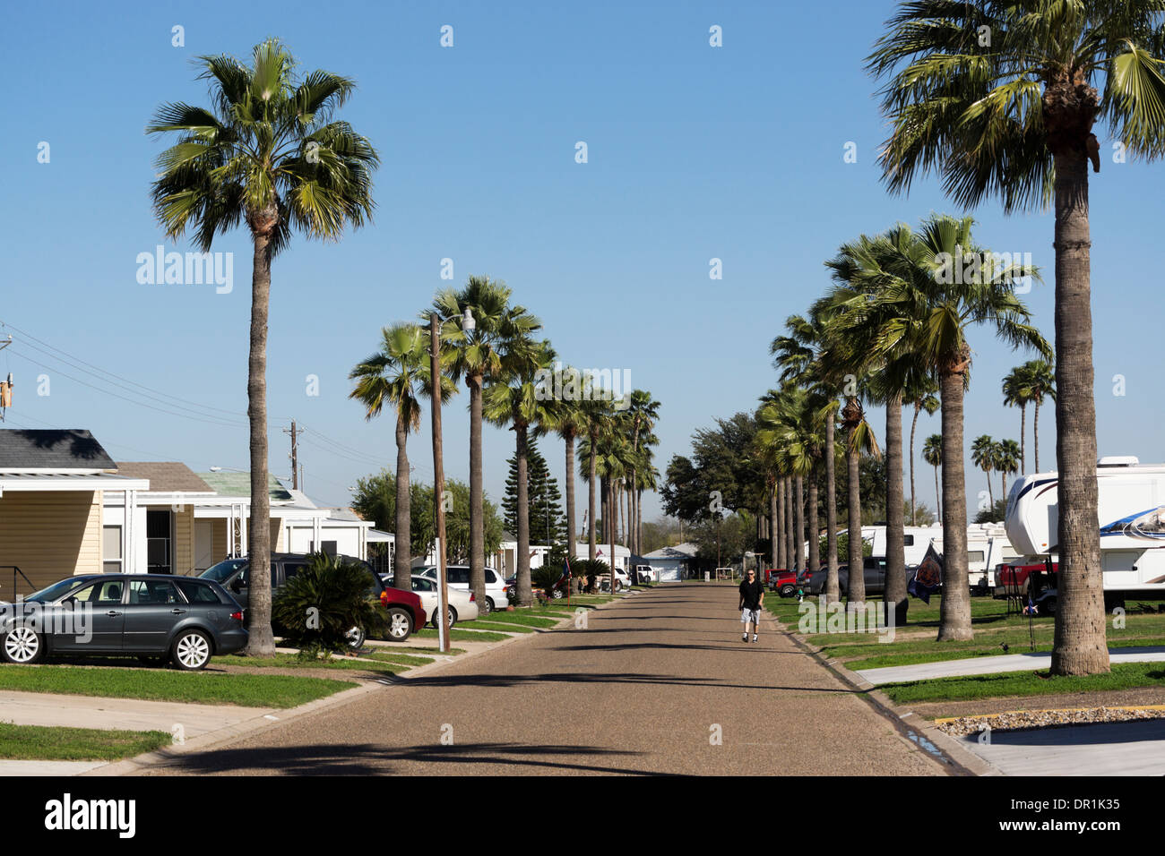 Palm Trees Line A Street In South Texas Mobile Home And RV Resort