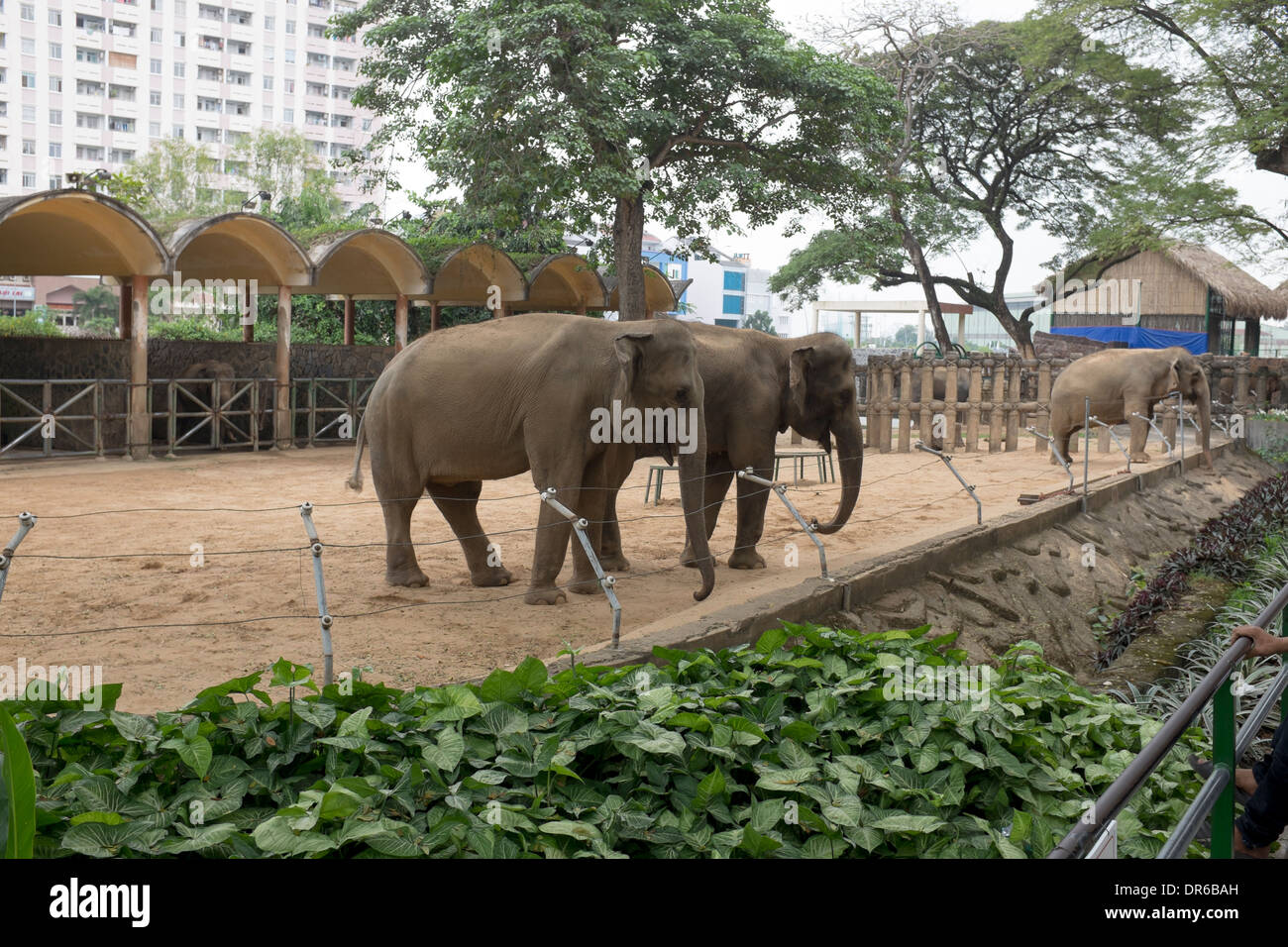 Elephants saigon zoo and botanical garden ho chi minh city Garden city zoo