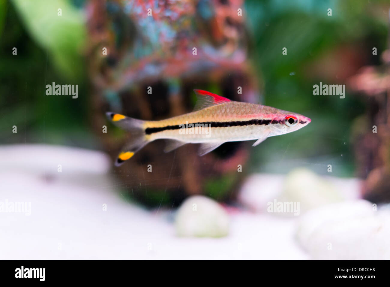 Tropical fish for sale at a aquarium centre stock photo for Stock fish for sale