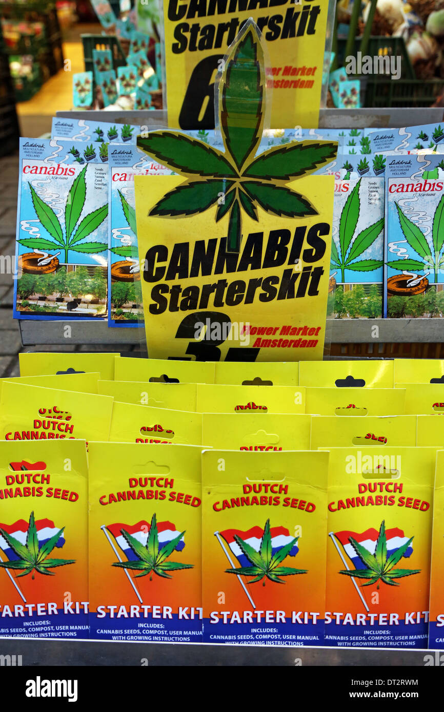 cannabis plant seed starter kit souvenirs at the flower market in amsterdam holland