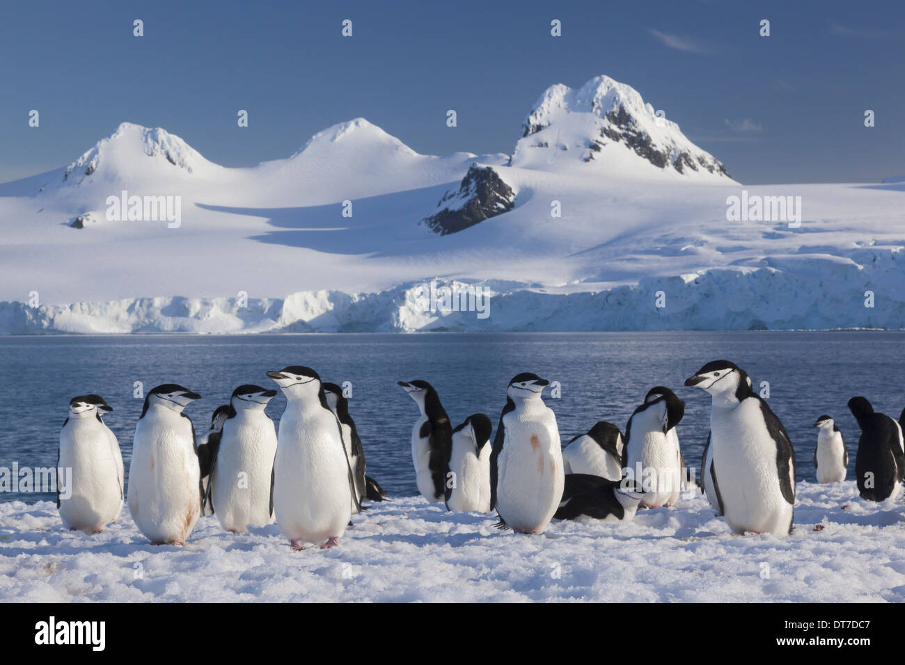 hawaii map with Stock Photo Chinstrap Penguins On Half Moon Island In The South Shetland Islands 66547047 on 305 likewise 16406961745 besides File European union emu map zh hant in addition Tambora additionally File Clyde tributaries.