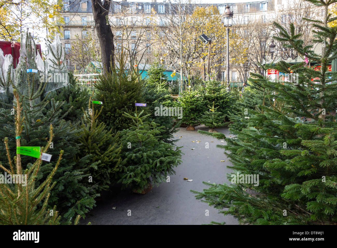 christmas tree market at the place des ternes in paris france - Christmas Tree Market