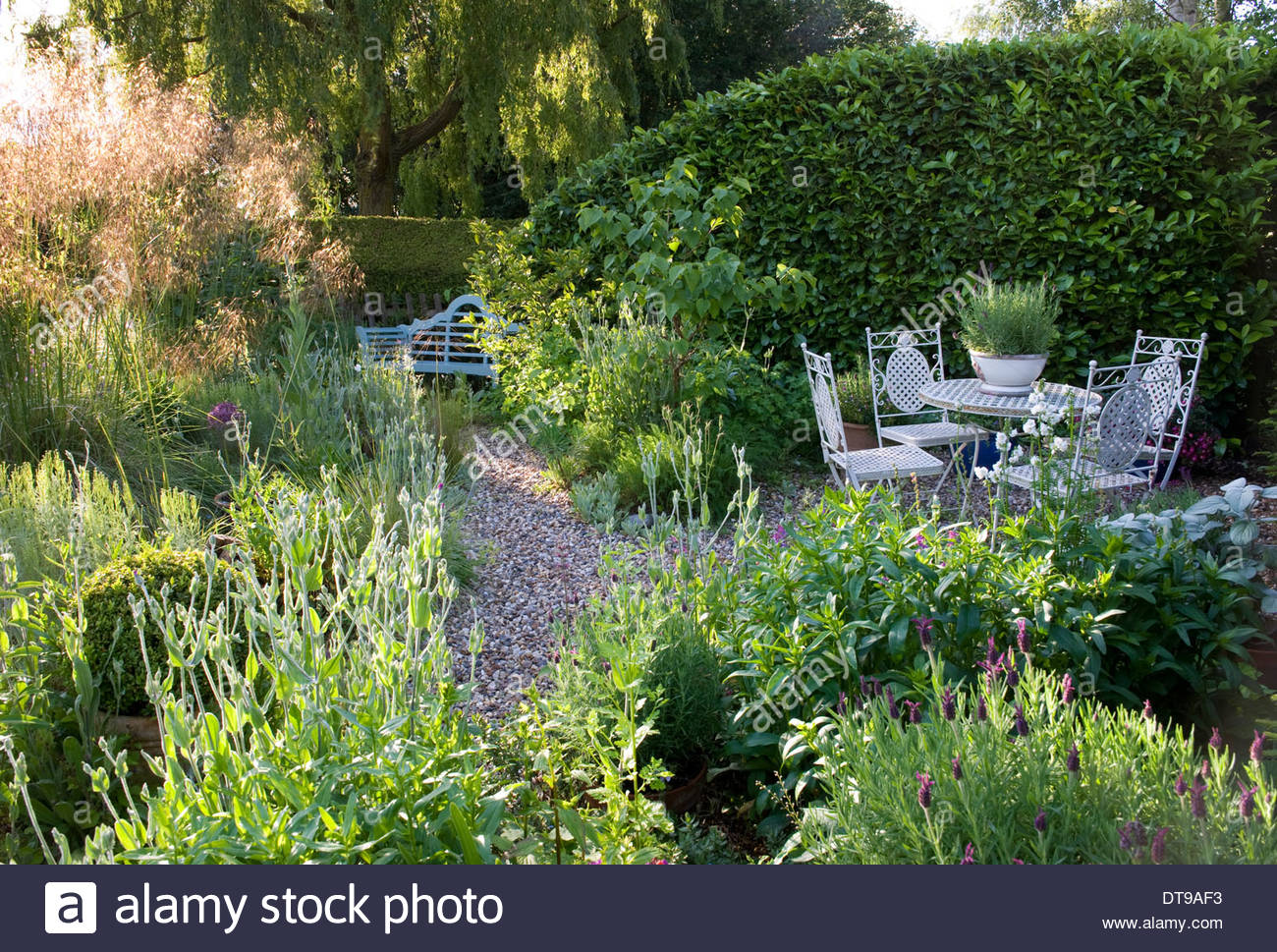 Country cottage garden - Stock Photo Wickets Saffron Walden Essex England Summer Country Cottage Garden Summer June Mid Summer Garden French Style White Metal Table