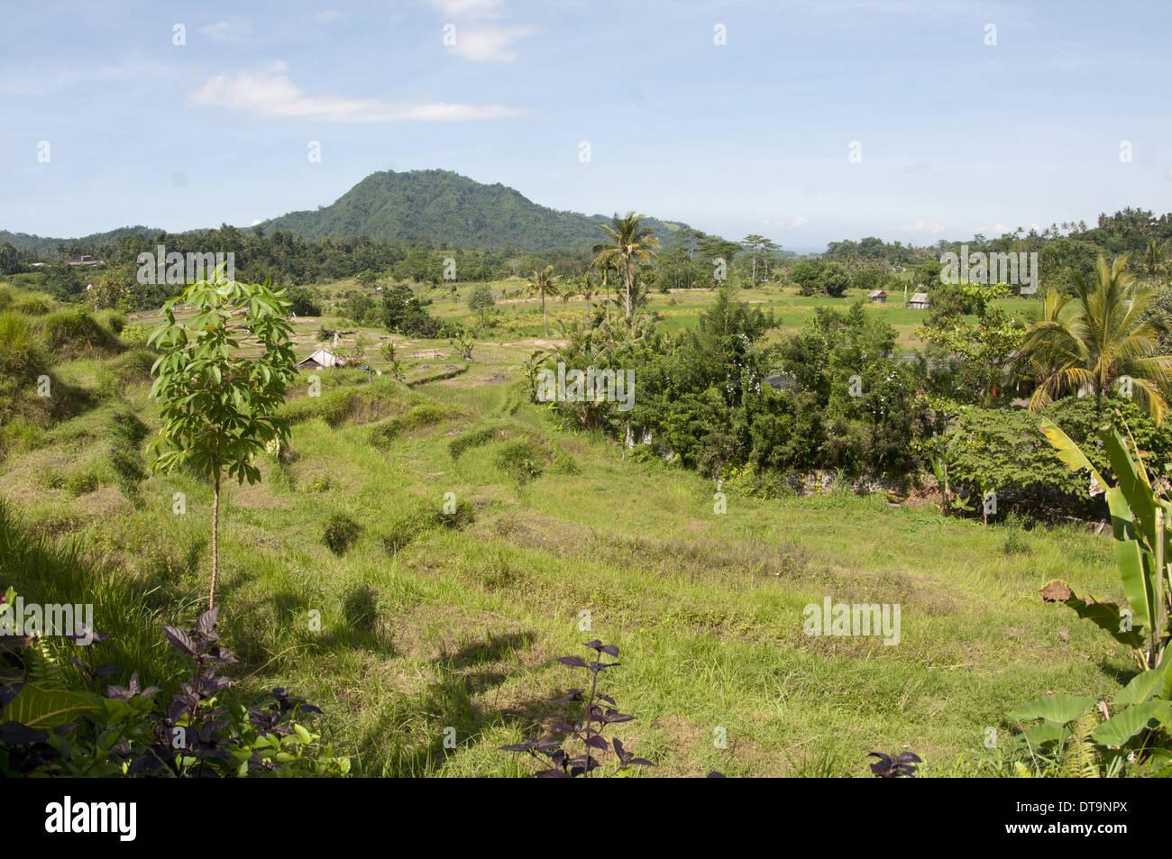 View Of Paddyfields Surya Shanti Villa Sidemen Karangasem Bali