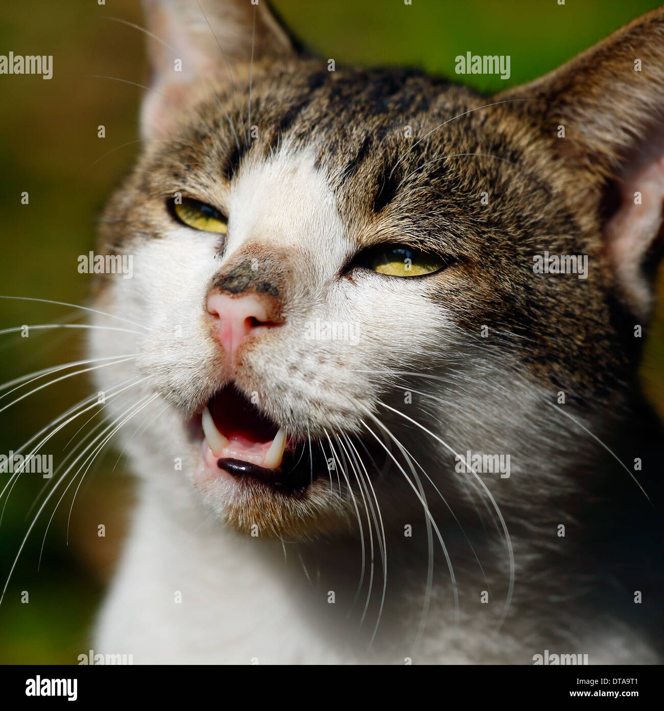 Closeup view of a cute cat face Stock Royalty Free Image