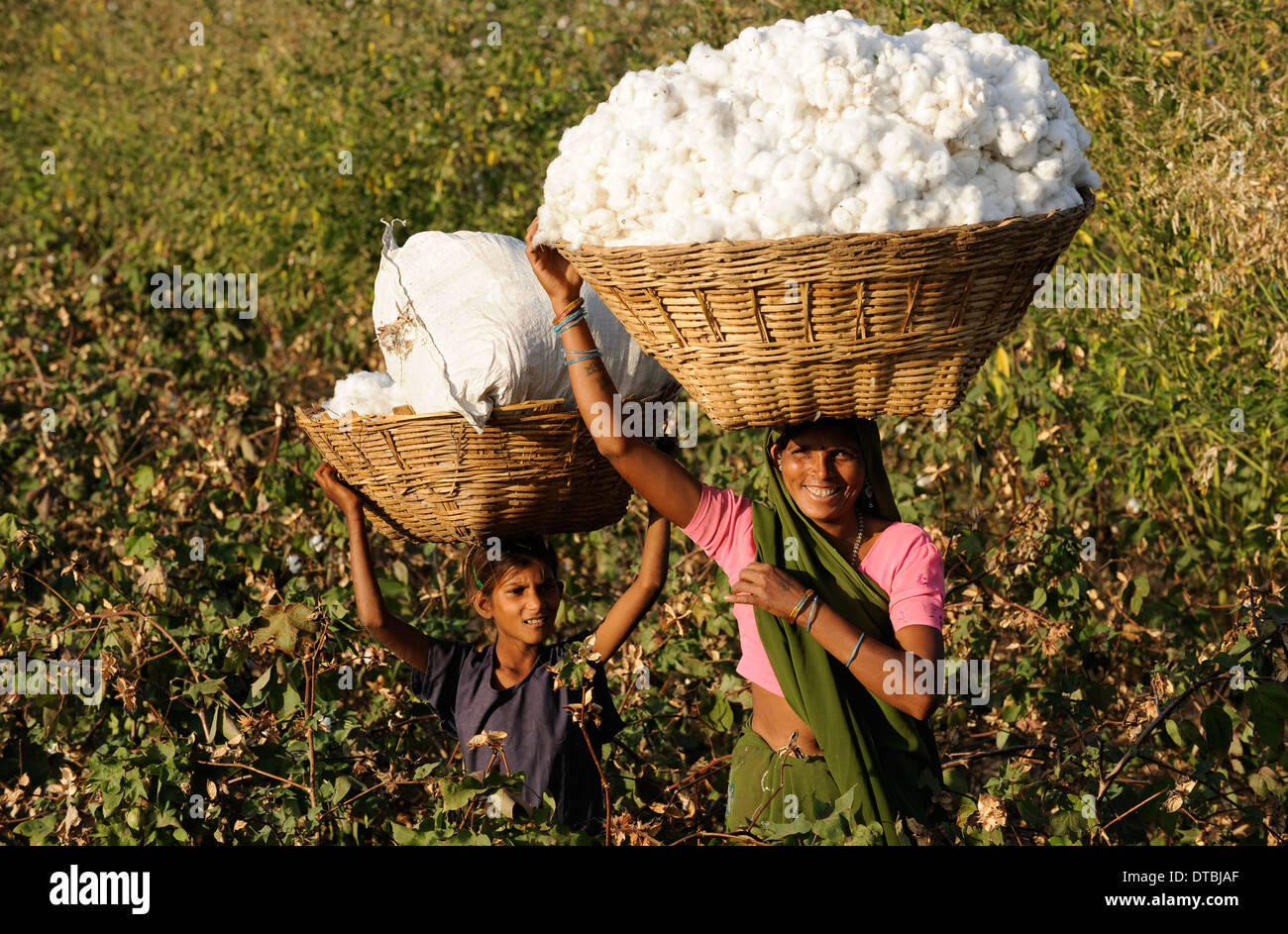 Is Cotton A Natural Resource Of India