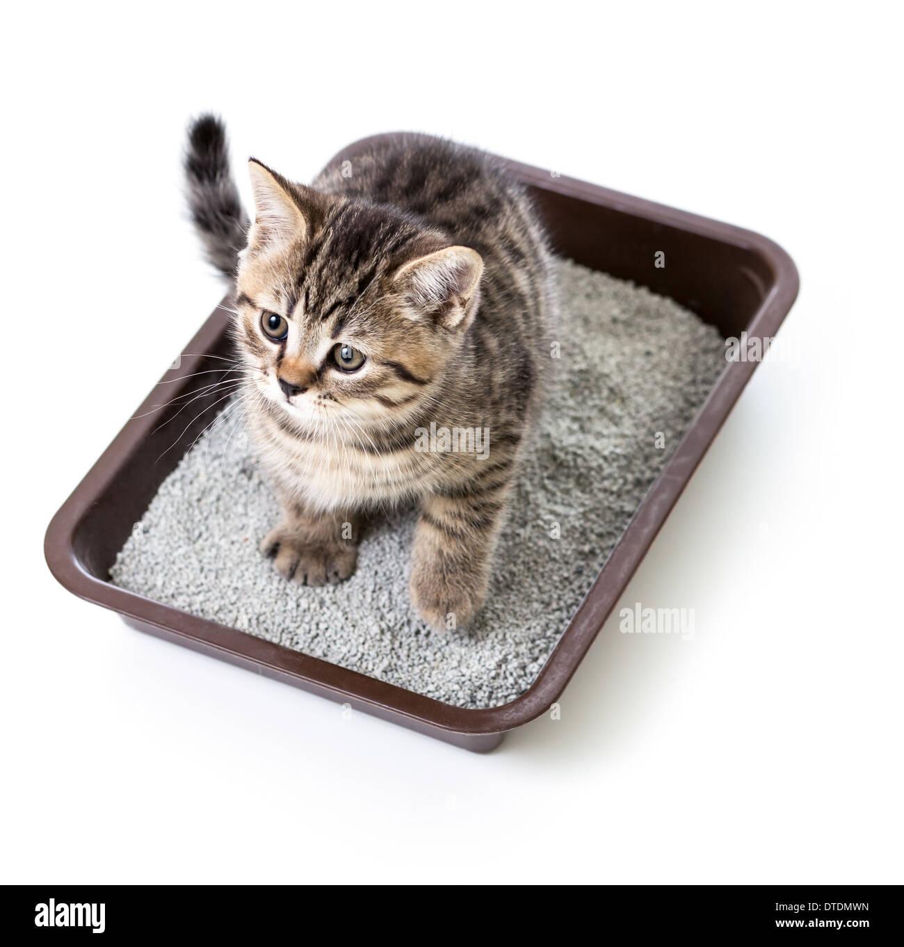 Clay Cat Litter In Toilet