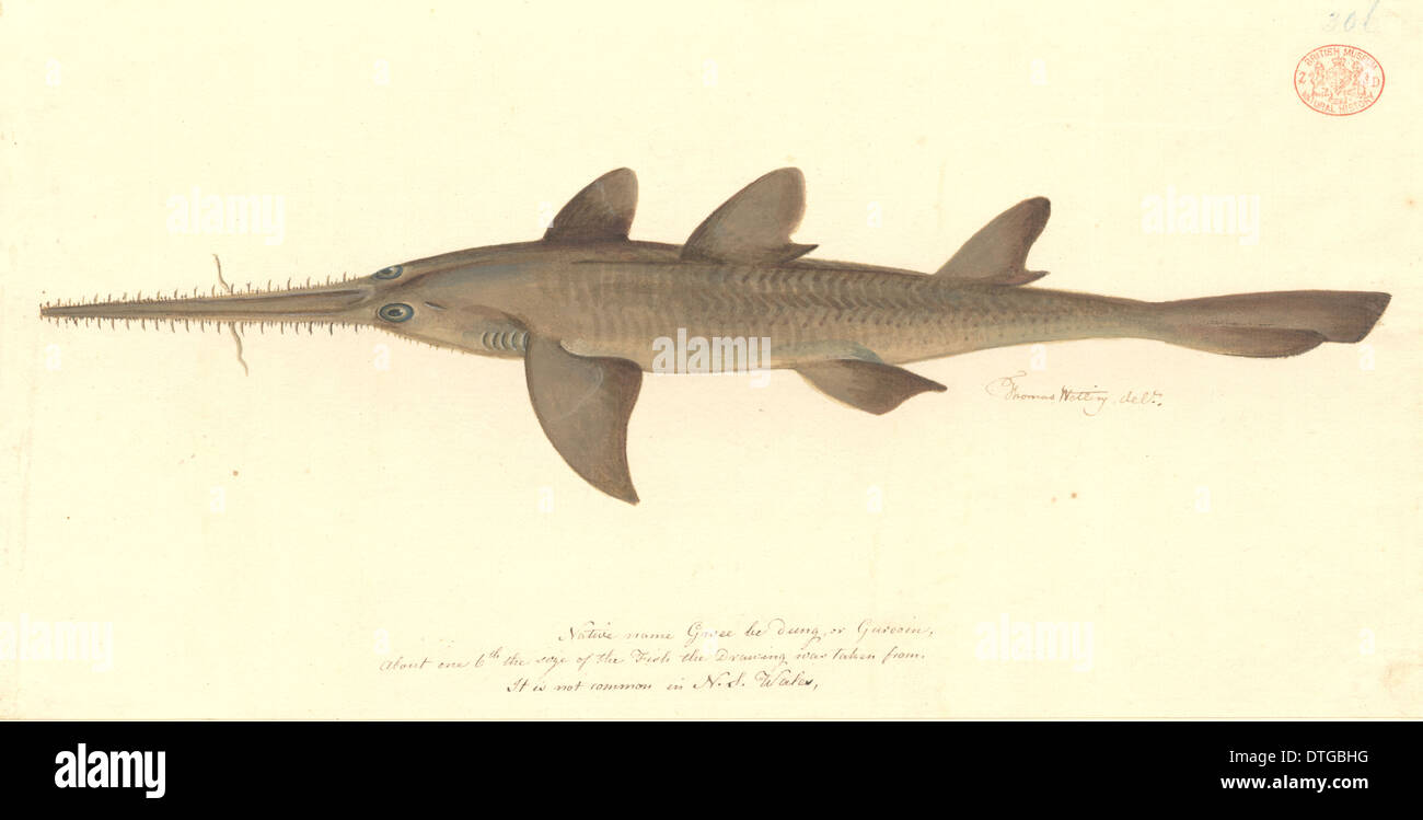 Shark Pictures  Photos of Rare and Common Species