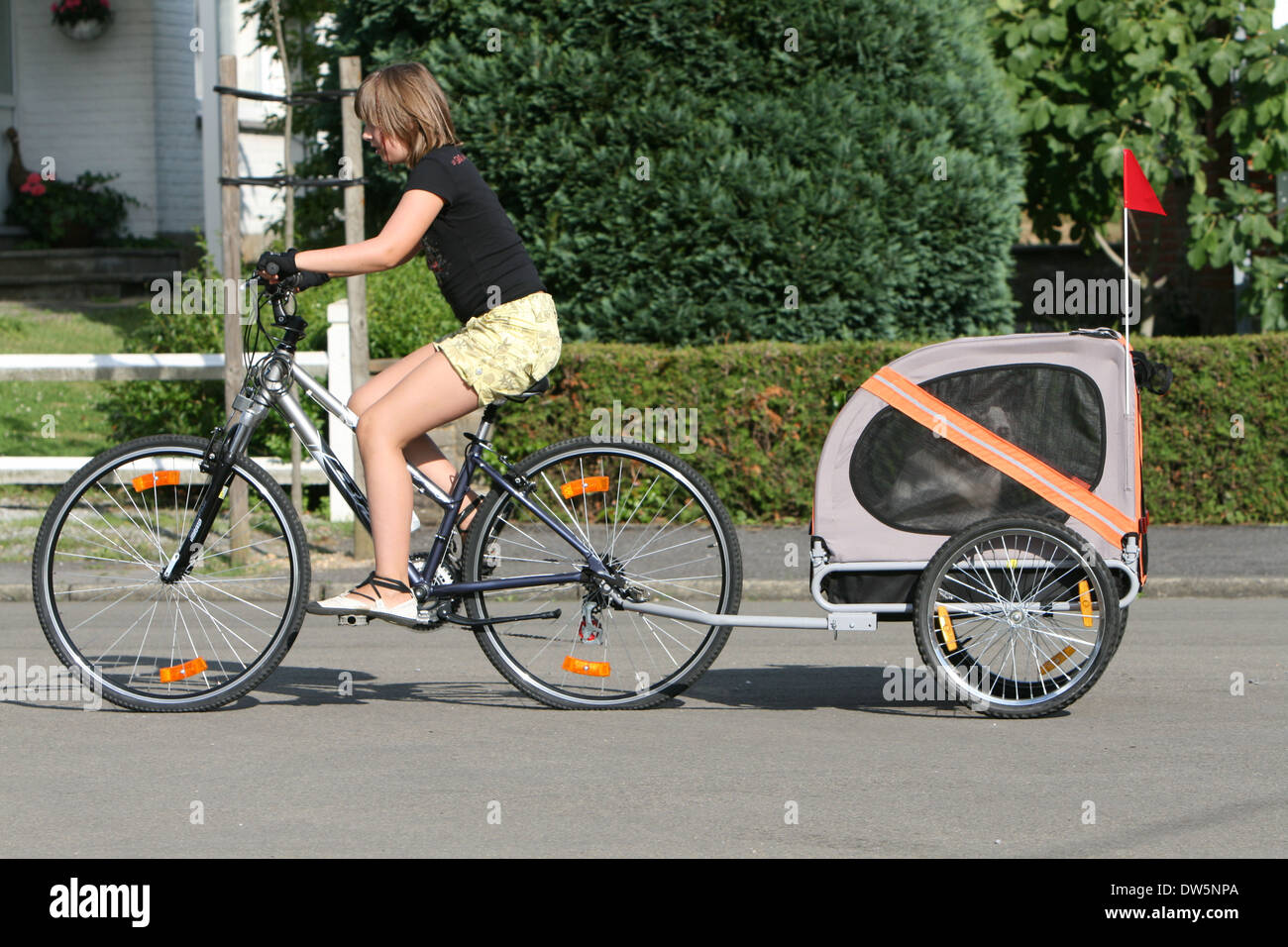 a girl riding a bike with a dog border collie in a trailer stock photo 67124354 alamy. Black Bedroom Furniture Sets. Home Design Ideas