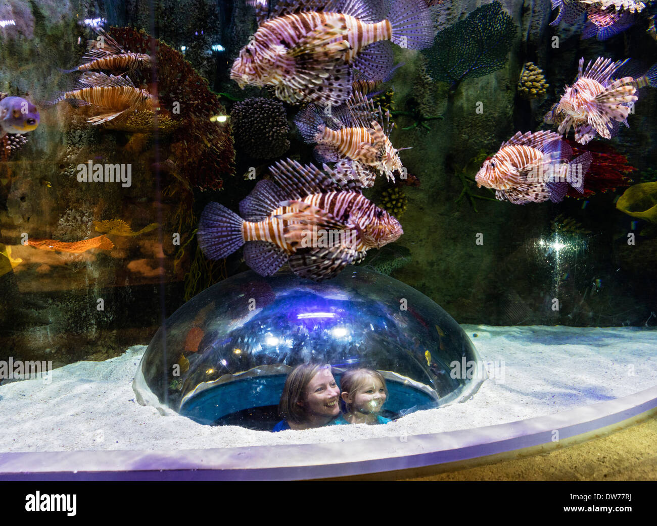 Freshwater Aquarium Fish In Dubai - Tourists looking at lion fish inside aquarium tank at underwater zoo aquarium at dubai mall in