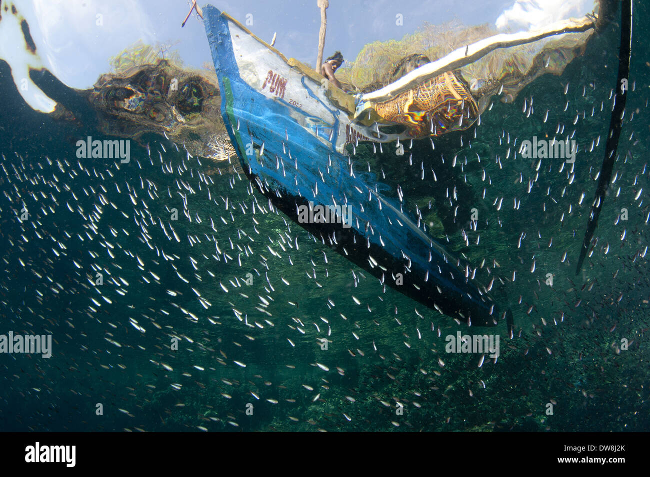 Fisherman with fish basket on fishing boat above and fish ... Pacific Ocean Underwater Animals