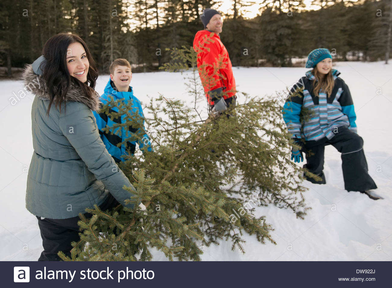 Family carrying cut down Christmas tree in snow Stock Photo ...