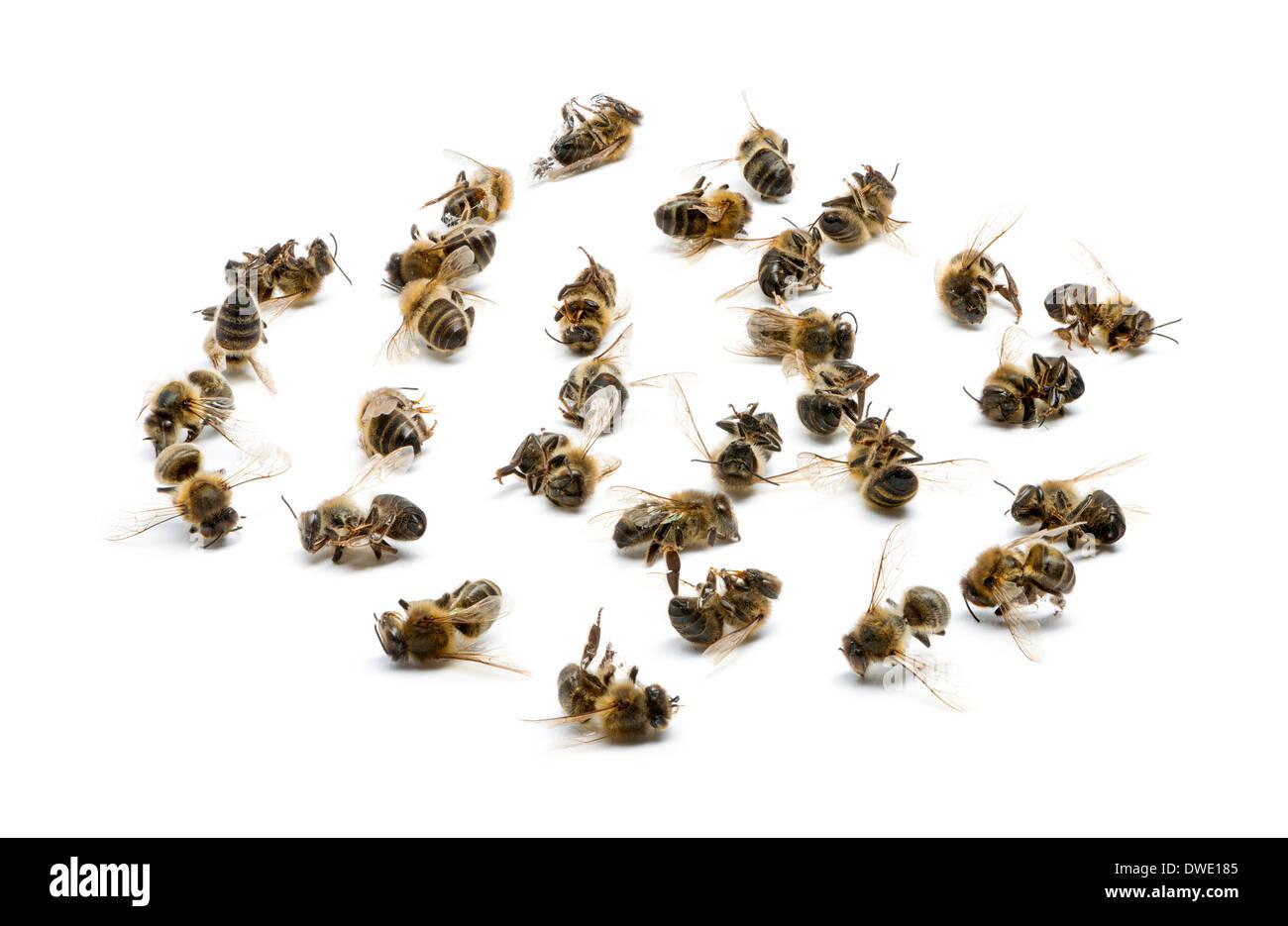 honey bees stock photos u0026 honey bees stock images alamy