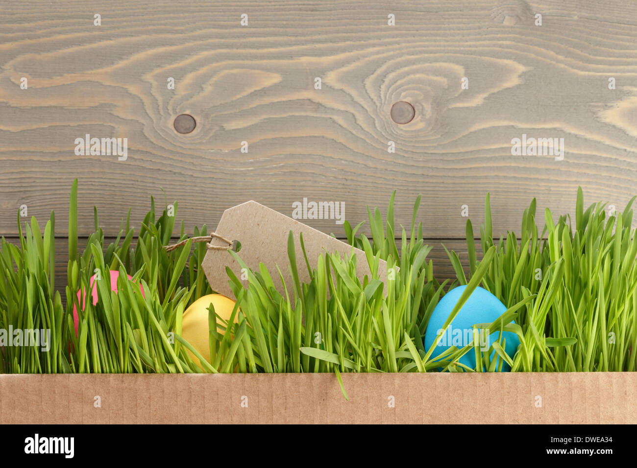 Easter Eggs Hidden In Grass Border Composition Wood Background