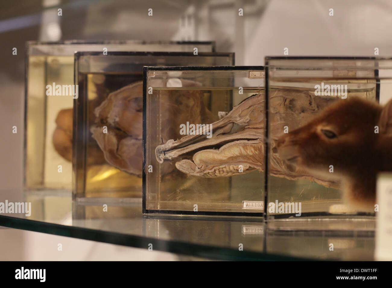 Anatomy Museum Edinburgh 7751622 Follow4morefo