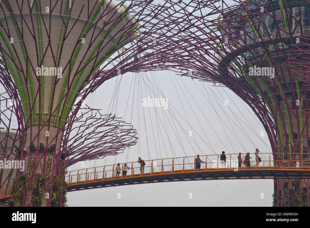 Sky Garden Walk: Tourists Visit The Sky Walk At Gardens By The Bay In