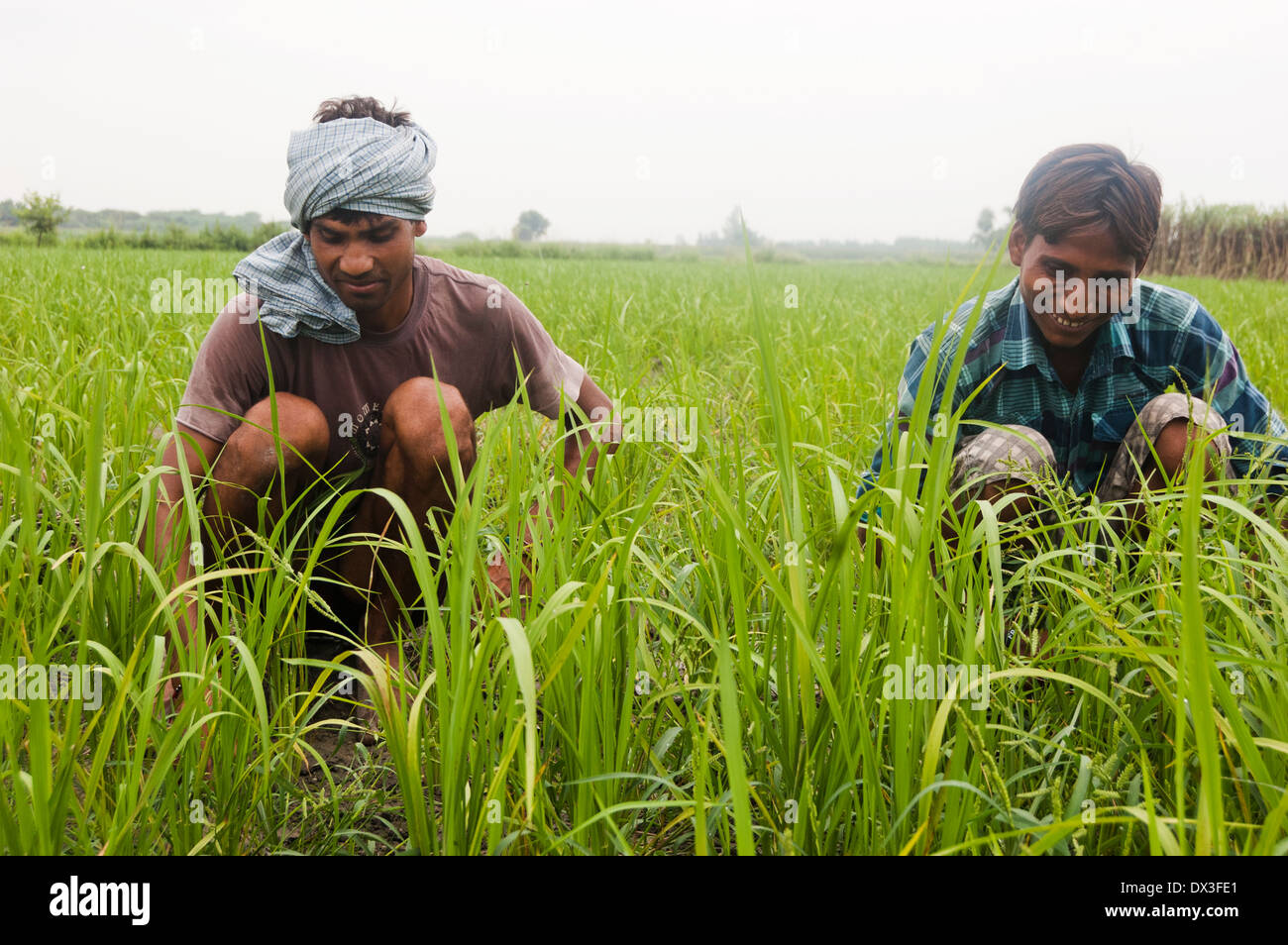 Indian Farmer Working In Farm Stock Photo, Royalty Free ...