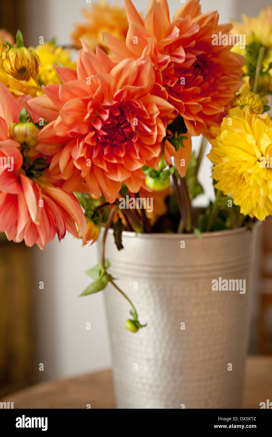 Orange and yellow dahlia bouquet in silver bucket Stock ...