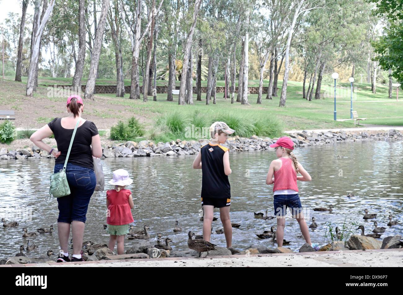 Family Feeding Ducks In Bicentennial Park Tamworth Nsw Australia