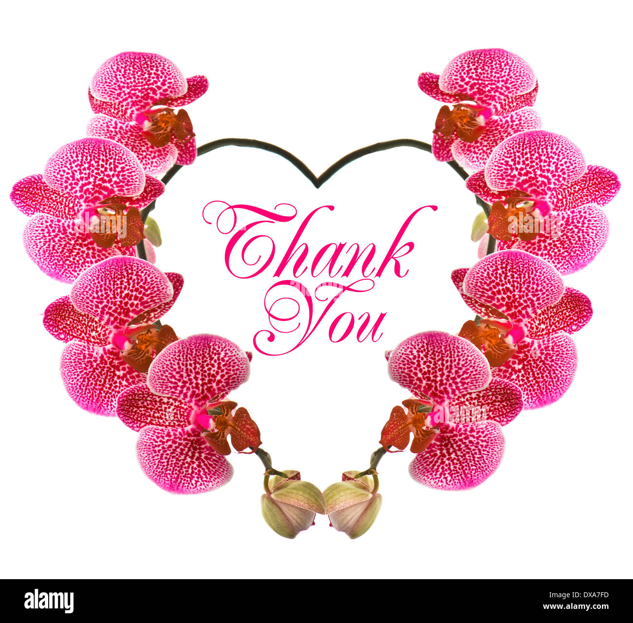 Beautiful Thank You Cards thank you card with pink orchid stock photo, royalty free image