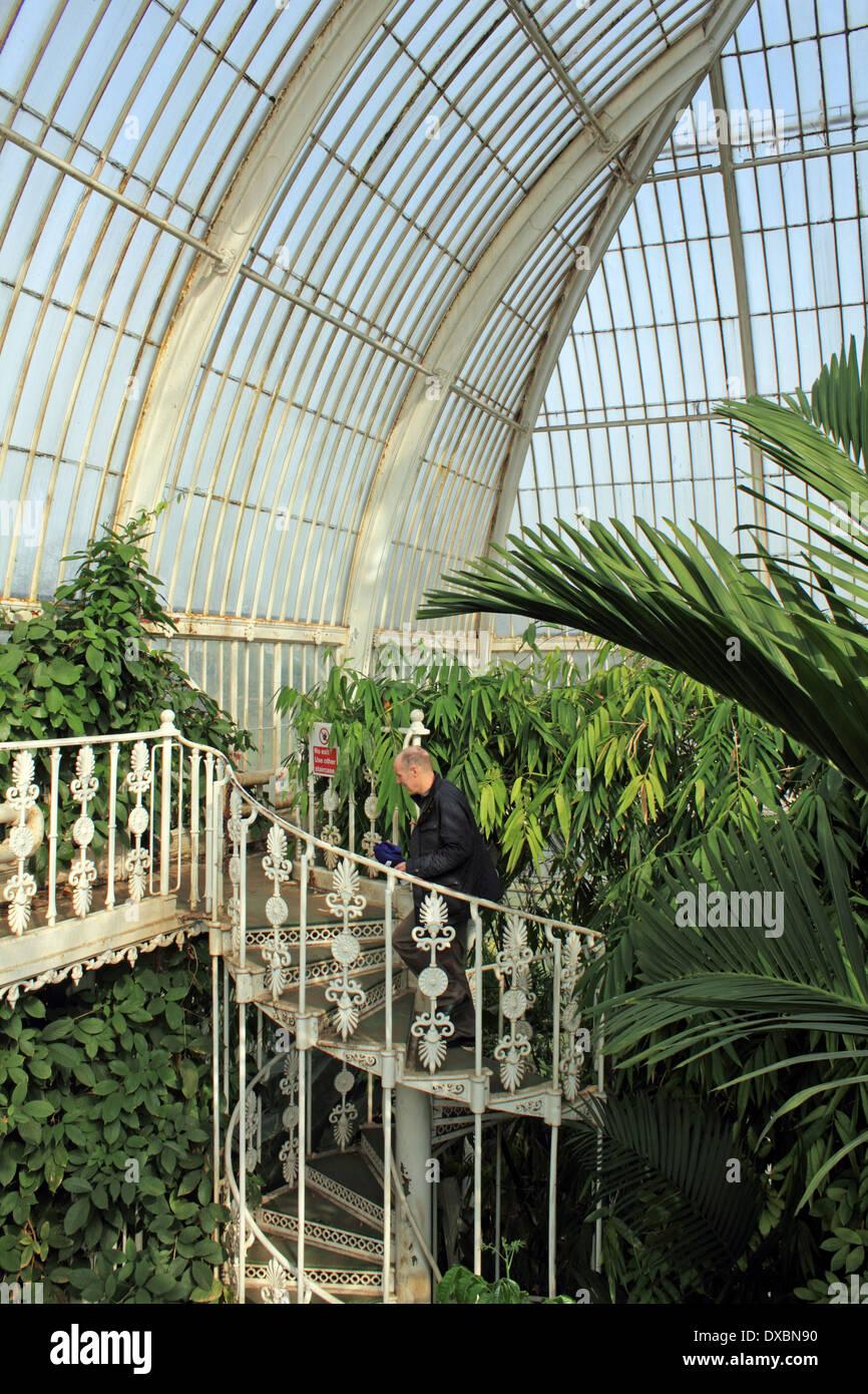 Inside The Palm House At Kew Gardens, London, England, UK