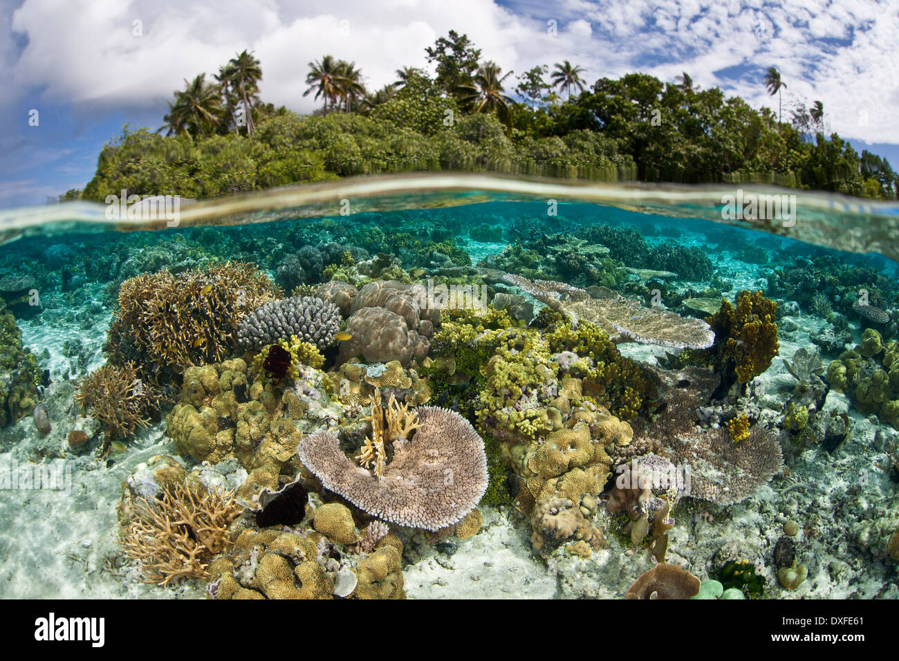 Fauna Of South Pacific Islands