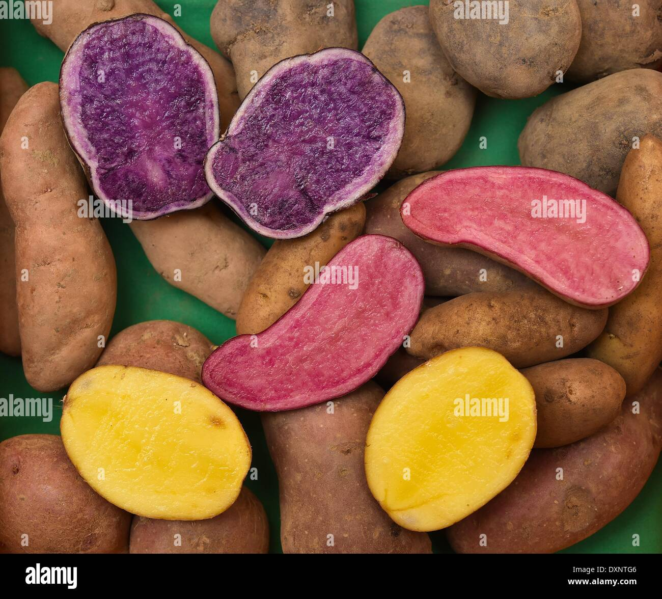 Different types of potatoes including Siglinde (yellow), Blue ...