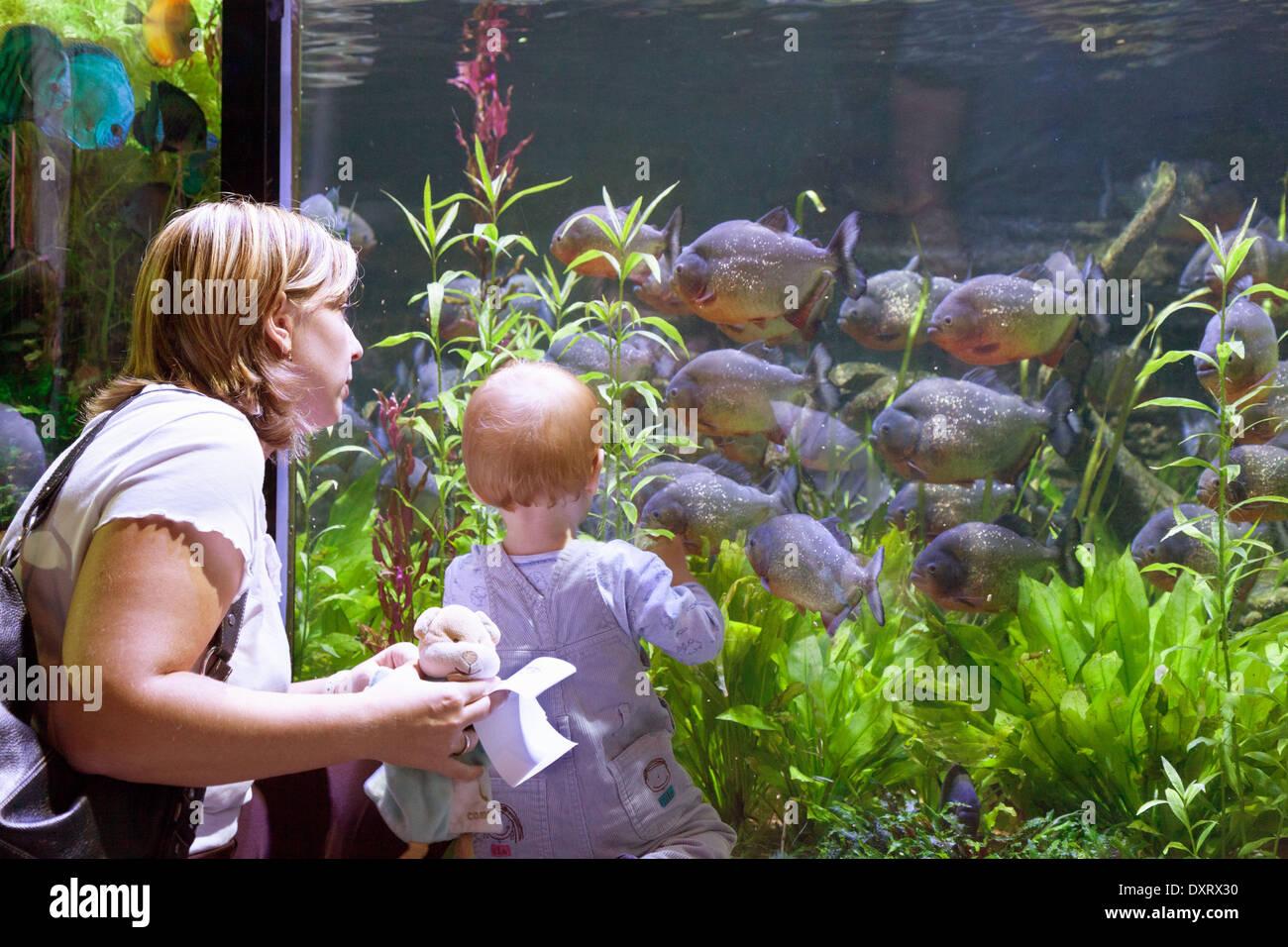 Freshwater Aquarium Fish In Dubai - A child and mother looking at fish dubai aquarium and underwater zoo dubai mall dubai uae united arab emirates