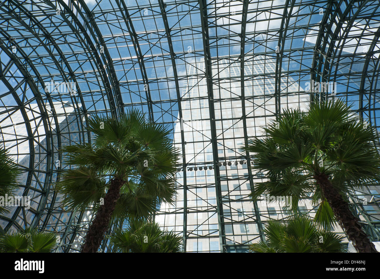 the glass ceiling and palm trees of the winter garden at