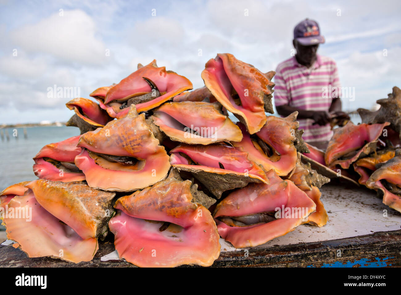 Live fresh conch at the fresh fish market montagu beach for Fishing nassau bahamas