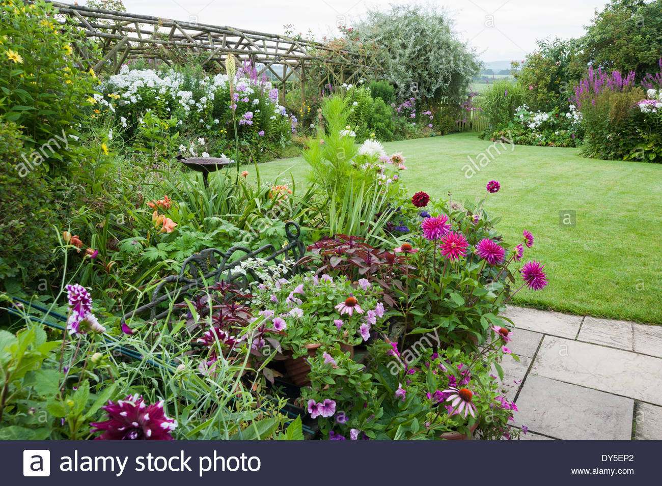 Pots Of Echinaceas, Petunias And Dahlias On A Paved Area Beside The House,  With Lawn And Gate Into Fields Beyond. Hilltop Dorset