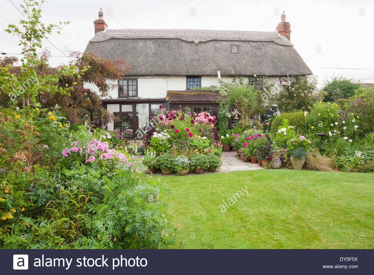 High Quality Thatched Cottage With Garden Full Of Dahlias, Shasta Daisies And Unusual  Annuals In Pots On Terrace, With Lawn. Hilltop, Dorset