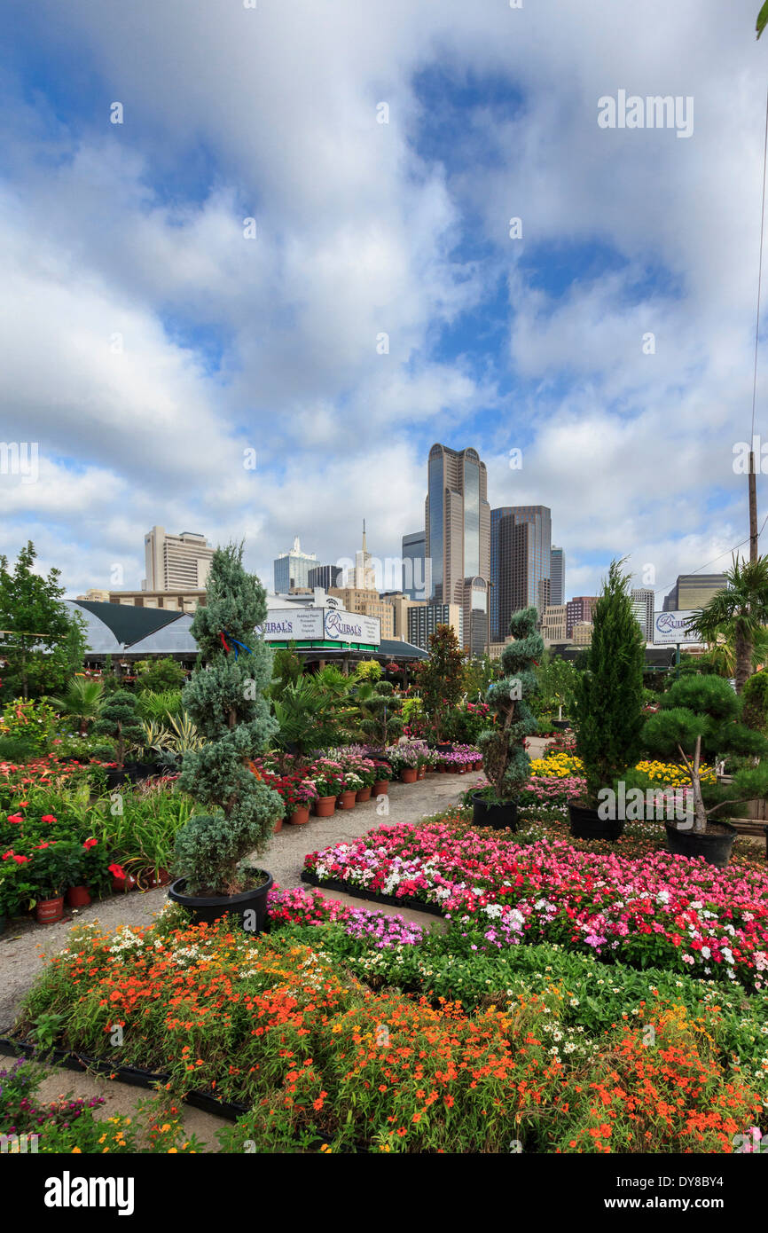 Stock Photo   Colourful, Dallas, Farmers Market, Garden Center, Nursery,  Ruibal, Skyline, Texas, USA, United States, America