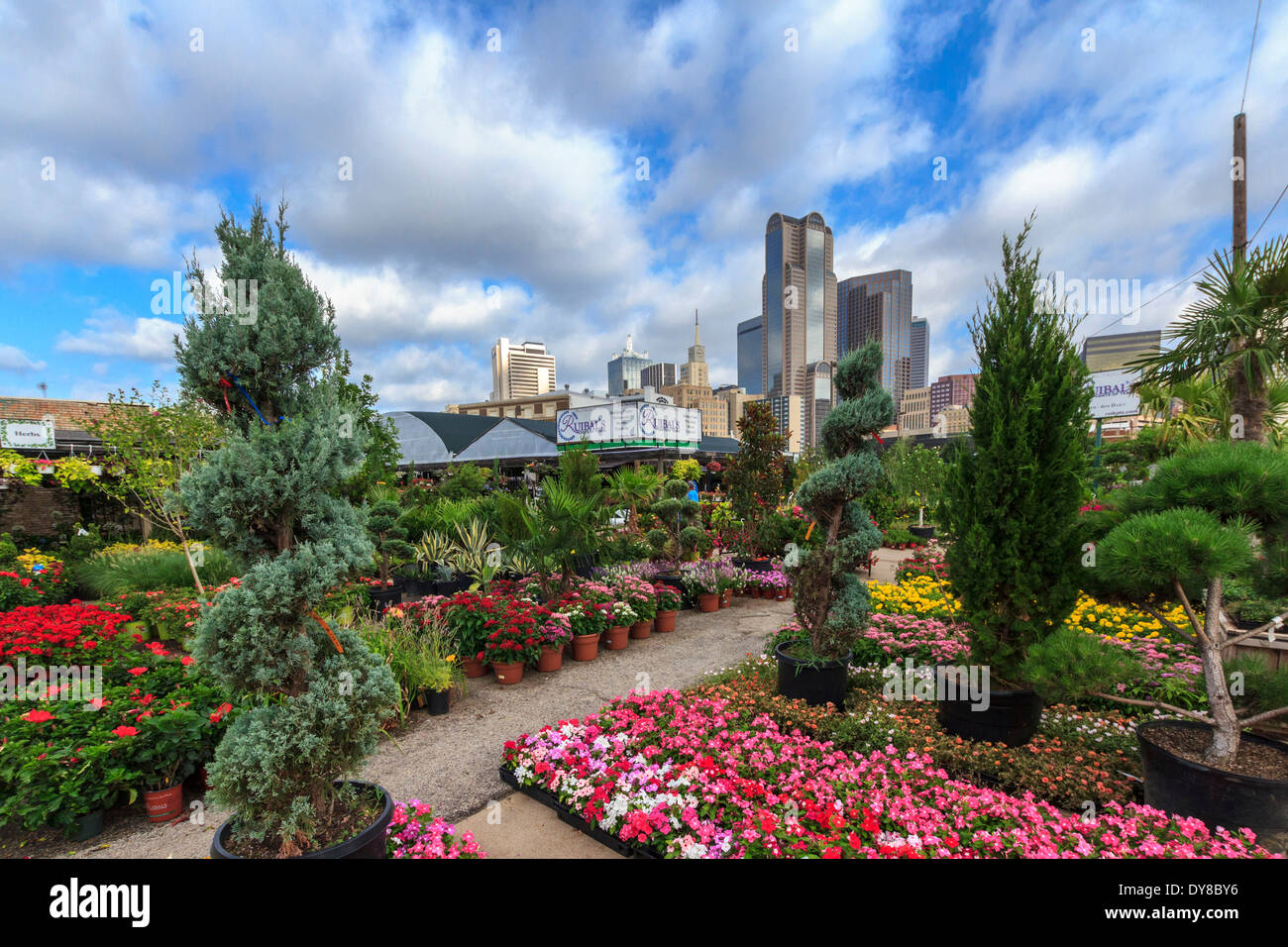 Charming Stock Photo   Colourful, Dallas, Farmers Market, Garden Center, Nursery,  Ruibal, Skyline, Texas, USA, United States, America