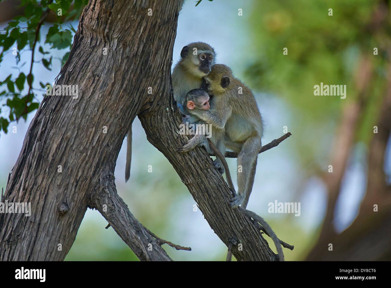 Animals Green - Best Image Atlproms.com