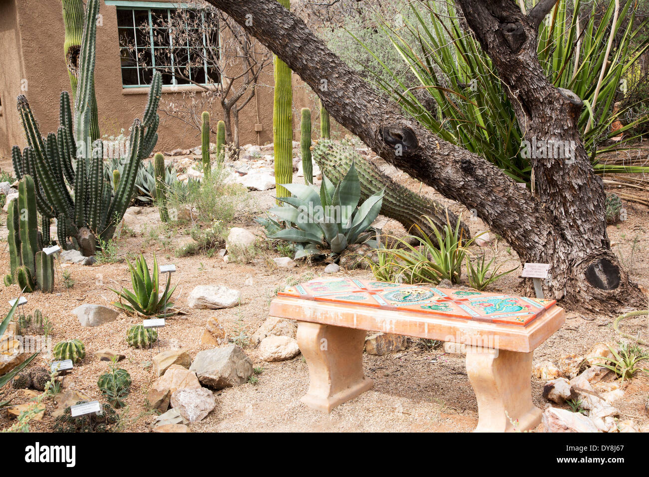 USA, Arizona, Tucson, Tucson Botanical Gardens, Cactus And Succulent Garden  With Bench And Adobe House