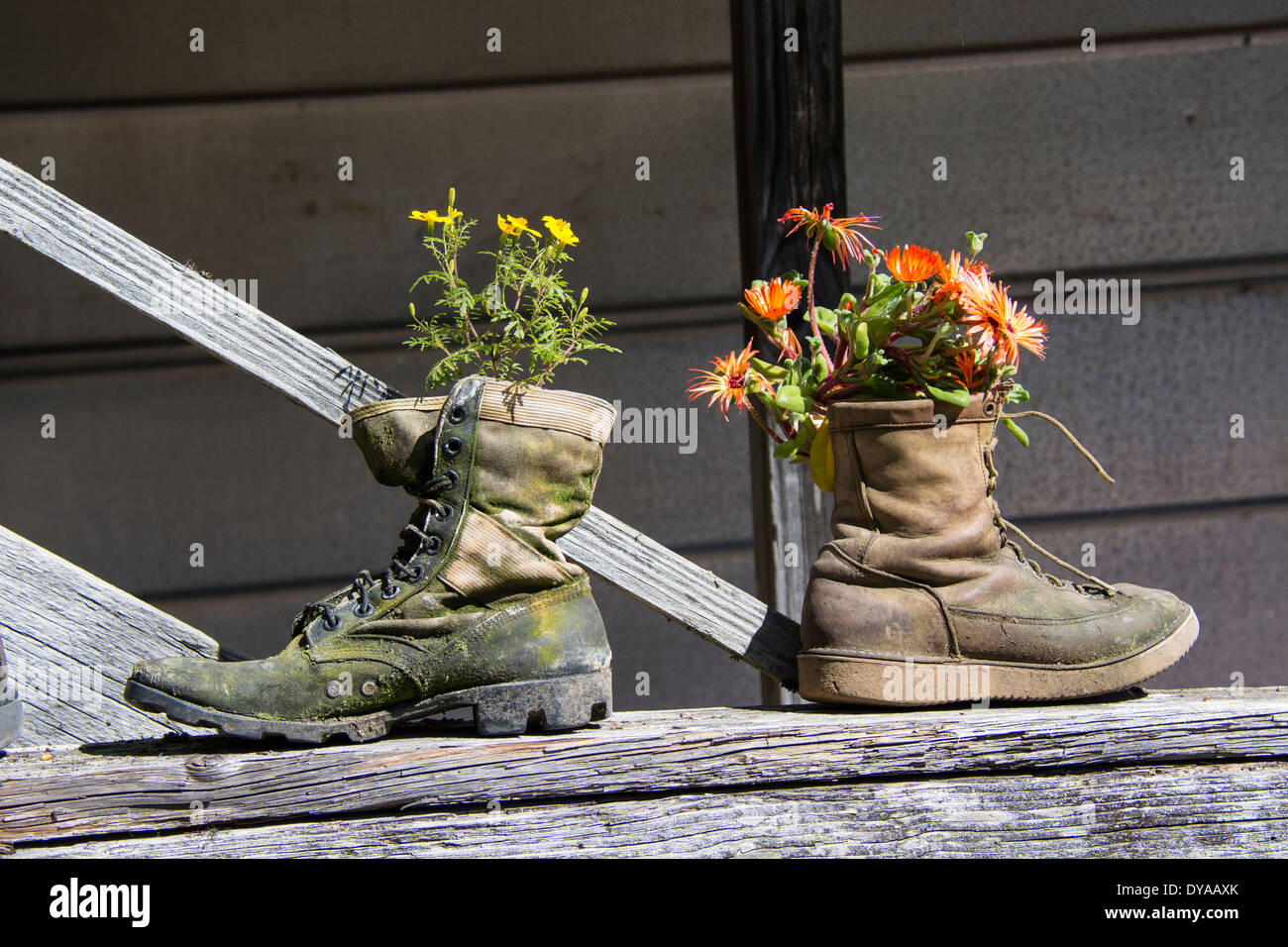 two-old-boots-used-as-quaint-and-unusual