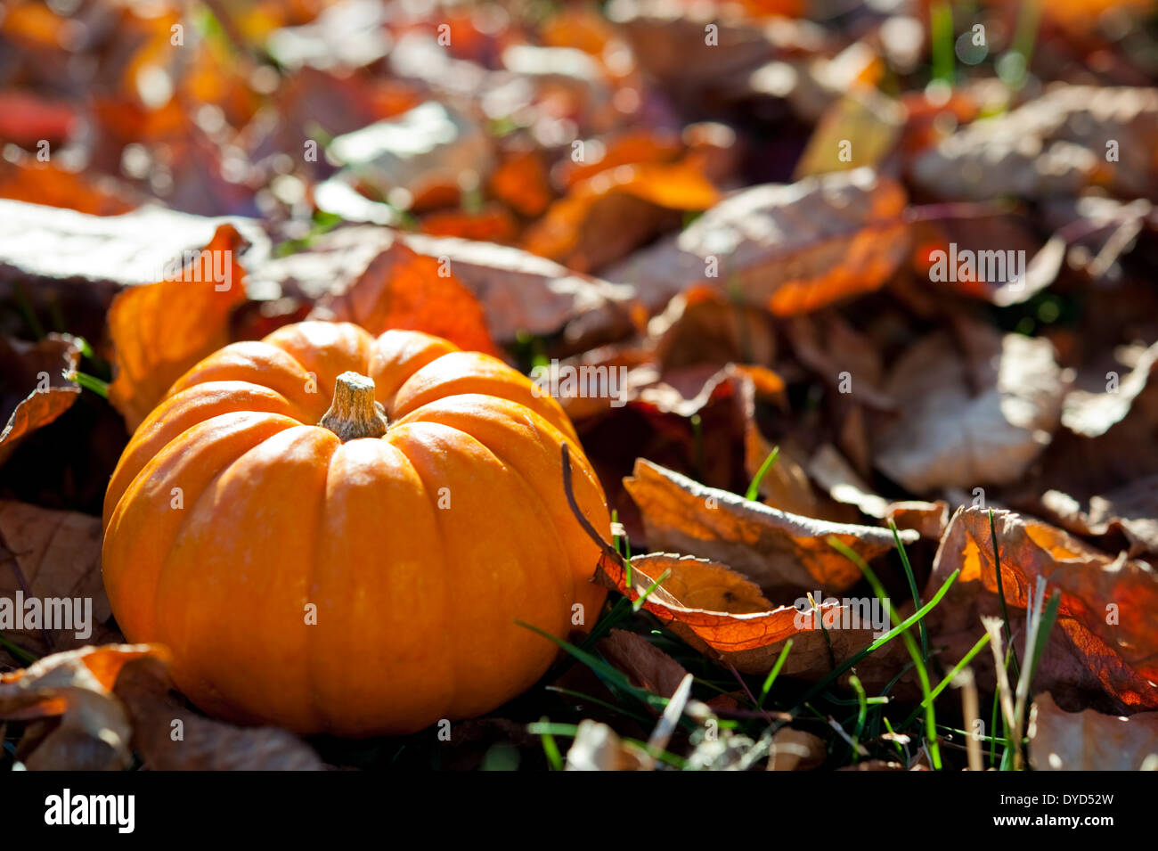 thanksgiving outdoor decorations images