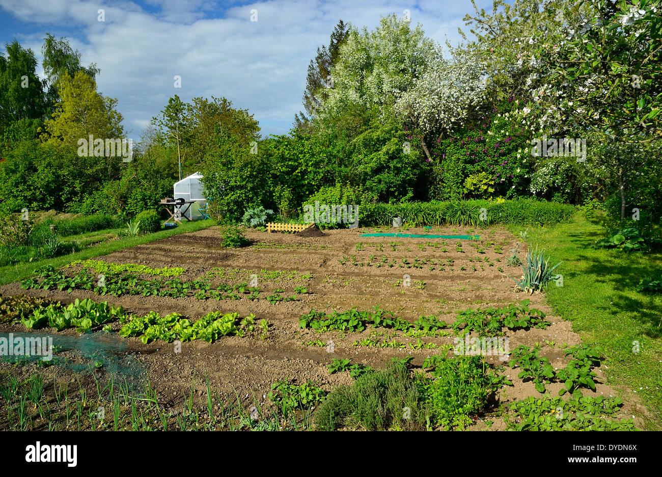Vegetable garden in spring vegetable beds small for Fruit and vegetable garden