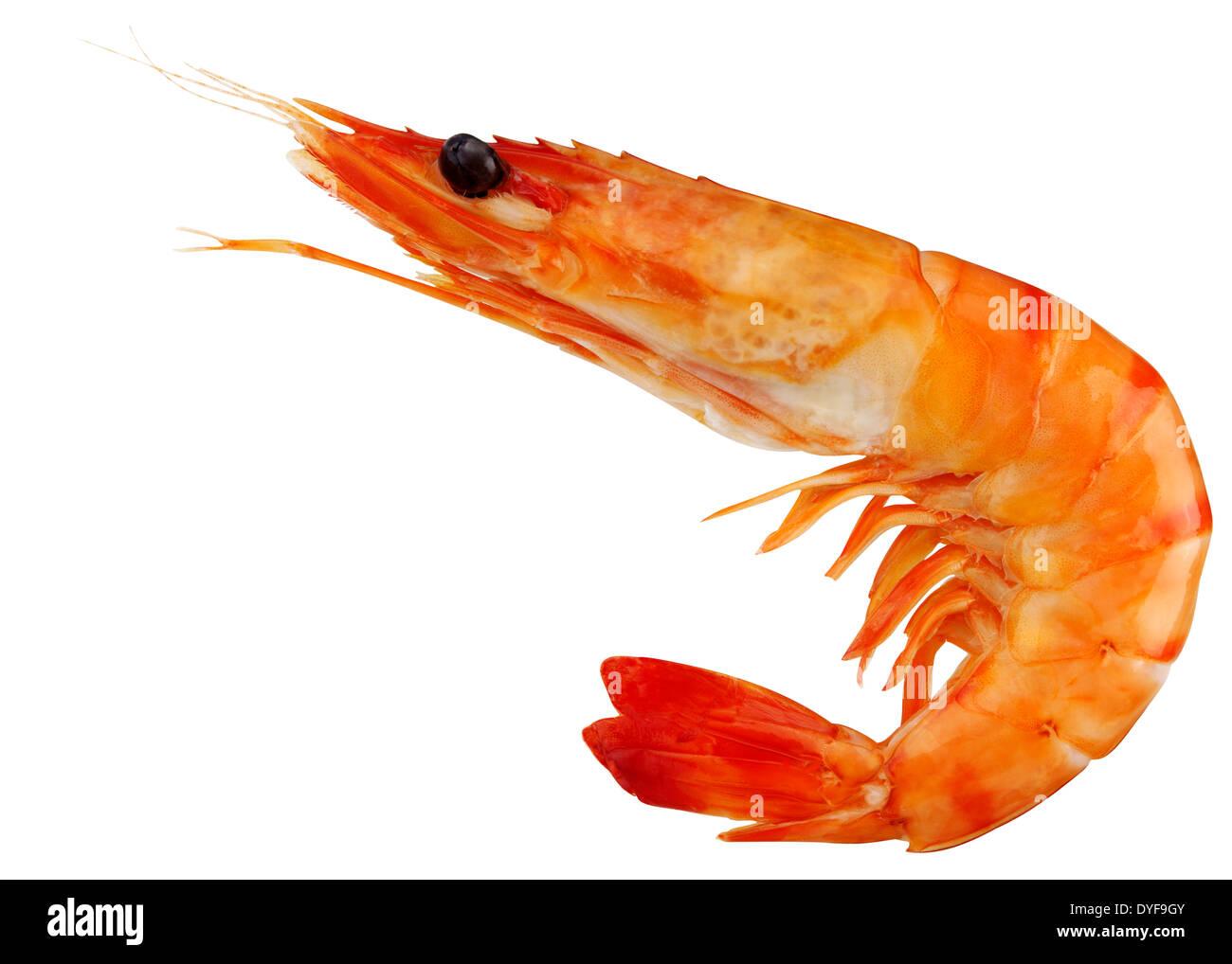 Image Gallery king prawn